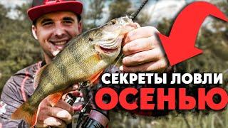 Ловля ОКУНЯ на дикой реке со средним течением Рыбалка на спиннинг