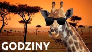 Żyrafy, wszędzie żyrafy ♫ Giraffes! po polsku | Cięty Vlog (Jacek Makarewicz)
