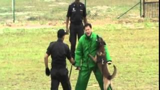 2011 Malaysia Prison K9 Unit Demo.