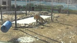 В Ярославский зоопарк приехал Николай Дроздов
