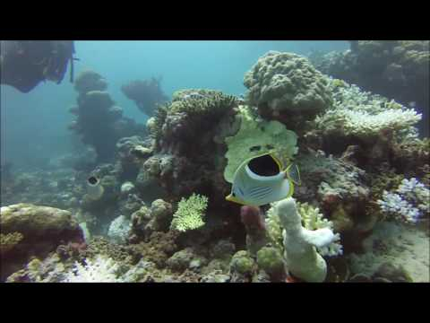 AGINCOURT RIBBON REEF  Barracuda Bommie Day 4
