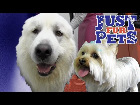 Springfield Dog Boarding, Doggy Day Care -(703)455-3333-Just Fur Pets