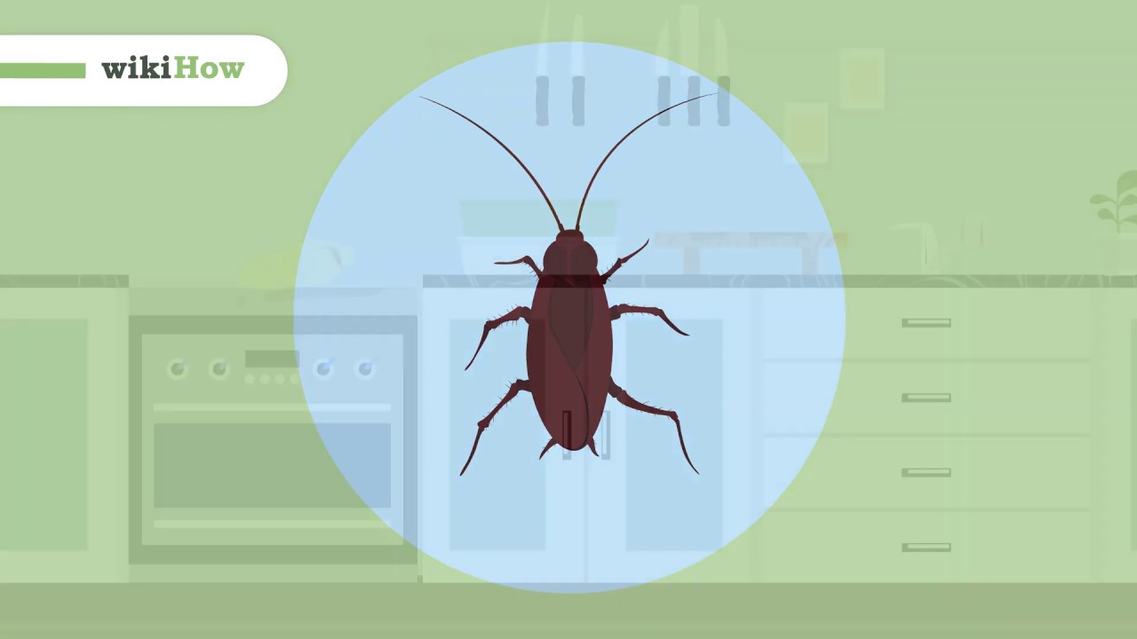 5 Ways To Get Rid Of Roaches Wikihow