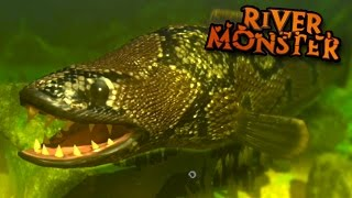 River Monster SnakeHead!!! - Feed And Grow   Ep8