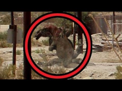 KOMODO DRAGON ATTACK - YouTube
