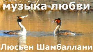 Люсьен Шамбаллани красивая музыка, любовь понятна без слов.
