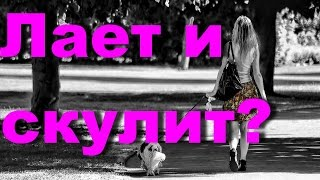 DOG / Если собака лает и скулит(Если собака лает и скулит Воспитываем без насилия. Собака друг человека!, 2016-04-18T06:31:47.000Z)