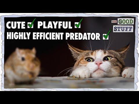 Why Do Vicious Killers Make Good Pets?