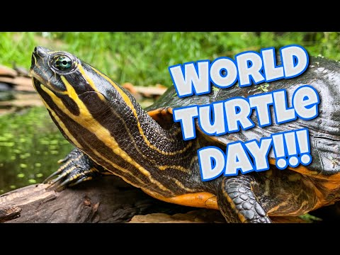 World Turtle Day 2020, World Tour Of My Turtles And Tortoises!