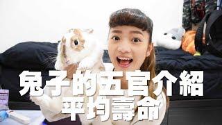 【侑敏頻道】兔子的五官介紹、平均壽命/兔寶可以陪我多久?