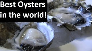Best Oysters in the world - Portland Oregon (Dan and Louise Oysters Bar)生蠔 (牡蠣)