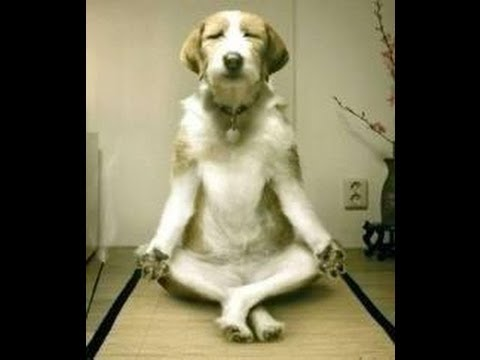 DOG BOOT CAMP:Chicago Big Dog Rehabilitation