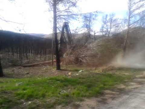 Procesadora forestal limpiando bosque quemado
