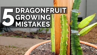 5 Dragon Fruit Groẁing Mistakes to Avoid