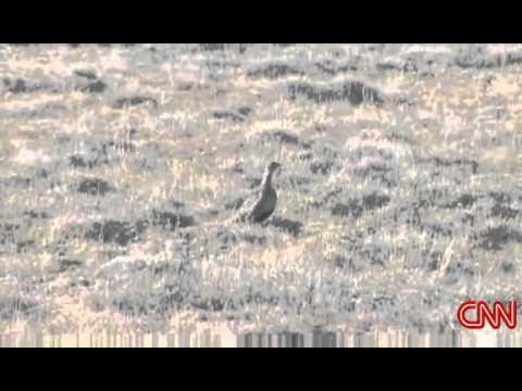 Wyoming wealth vs. wildlife