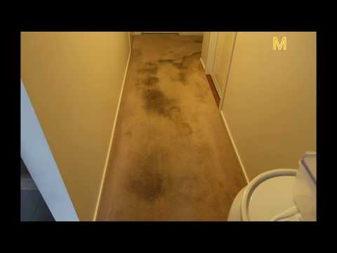 Dog urine in carpet: Monster Clean got you covered