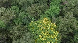 Floresta do Camboatá. As imagens não mentem!