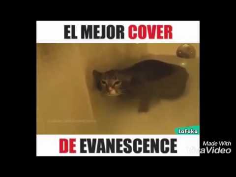 El Mejor Cover de Evanescence