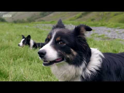 Countryfile - One Man & His Dog 2017 - Team Wales Mp3