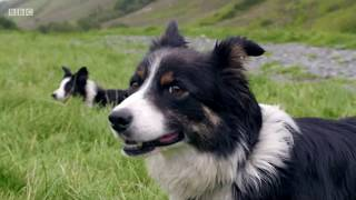 Countryfile - One Man & His Dog 2017 - Team Wales