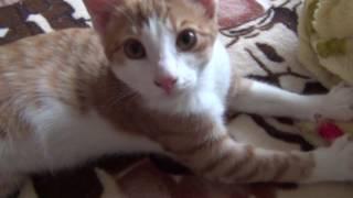 Кот любит делать массаж