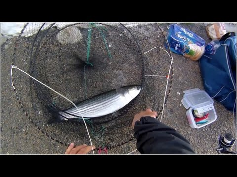 Shore Fishing - Harbour Wall Fishing For Grey Mullet