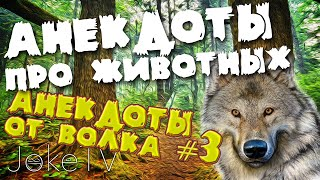 Анекдоты про животных. Анекдоты от Волка #3