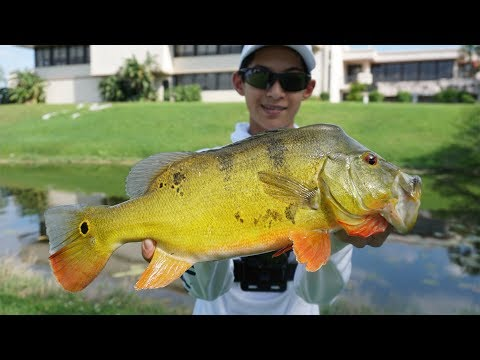 INSANE Peacock Bass Fishing In South Florida!!!