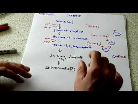 OCR A2 Biology: glycolysis part 1