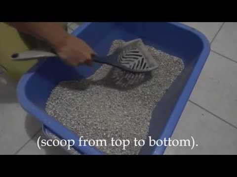 How to clean the litter box video
