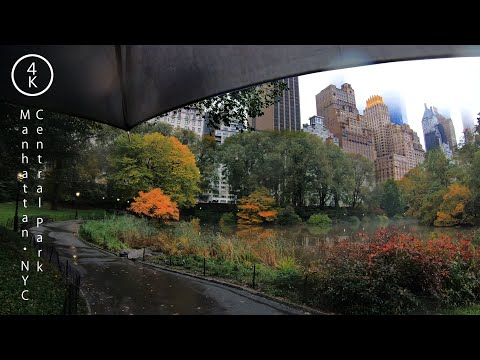 Walking in the Rain in Central Park in Manhattan, New York 4K - NYC Nature Rain Sounds ASMR