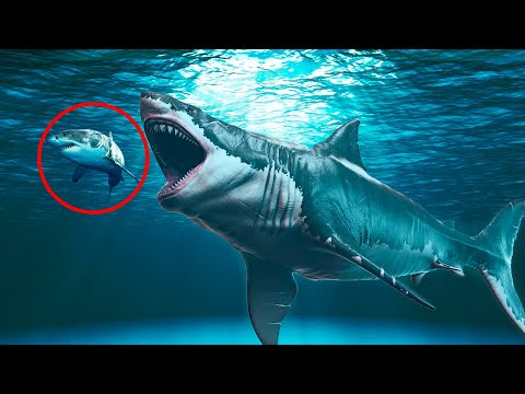 Why The Megalodon Definitely Went Extinct!