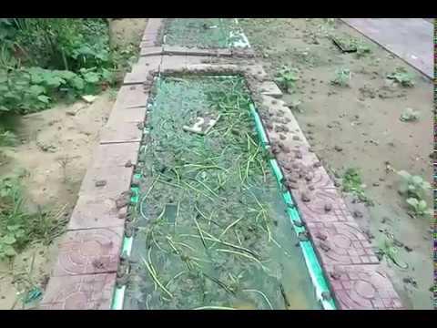 Feeding frogs in natural vegetable gardens, ការចិញ្ចឹមកង្កែបក្នុងសួនបន្លែធម្មជាតិ