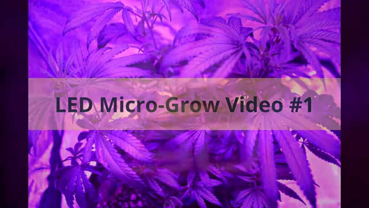 Micro-Grow Video #1 1 plant under 180 watt Captive Grow LED in 2u0027 x 3u0027 x 4u0027 tent & Micro-Grow Video #1: 1 plant under 180 watt Captive Grow LED in 2 ...