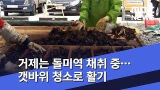 거제는 돌미역 채취 중…갯바위 청소로 활기 (2020.…