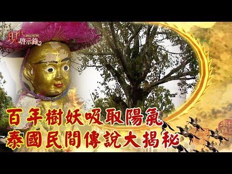 百年樹妖吸取陽氣 泰國民間傳說大揭秘 -- 現代啟示錄