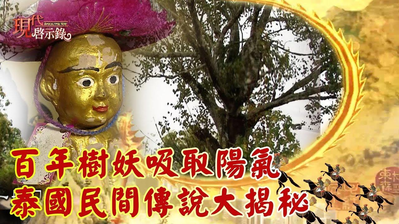 百年樹妖吸取陽氣 泰國民間傳說大揭秘 -- 現代啟示錄 - YouTube