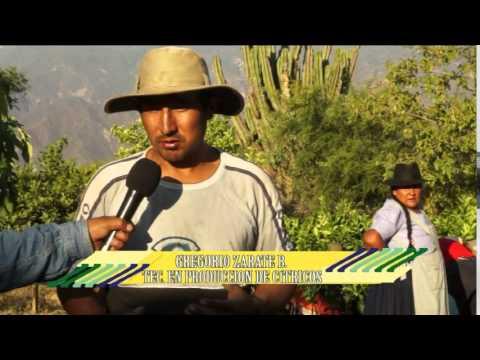 Producción De Cítricos En Villa Serrano (Chuquisaca, Bolivia)