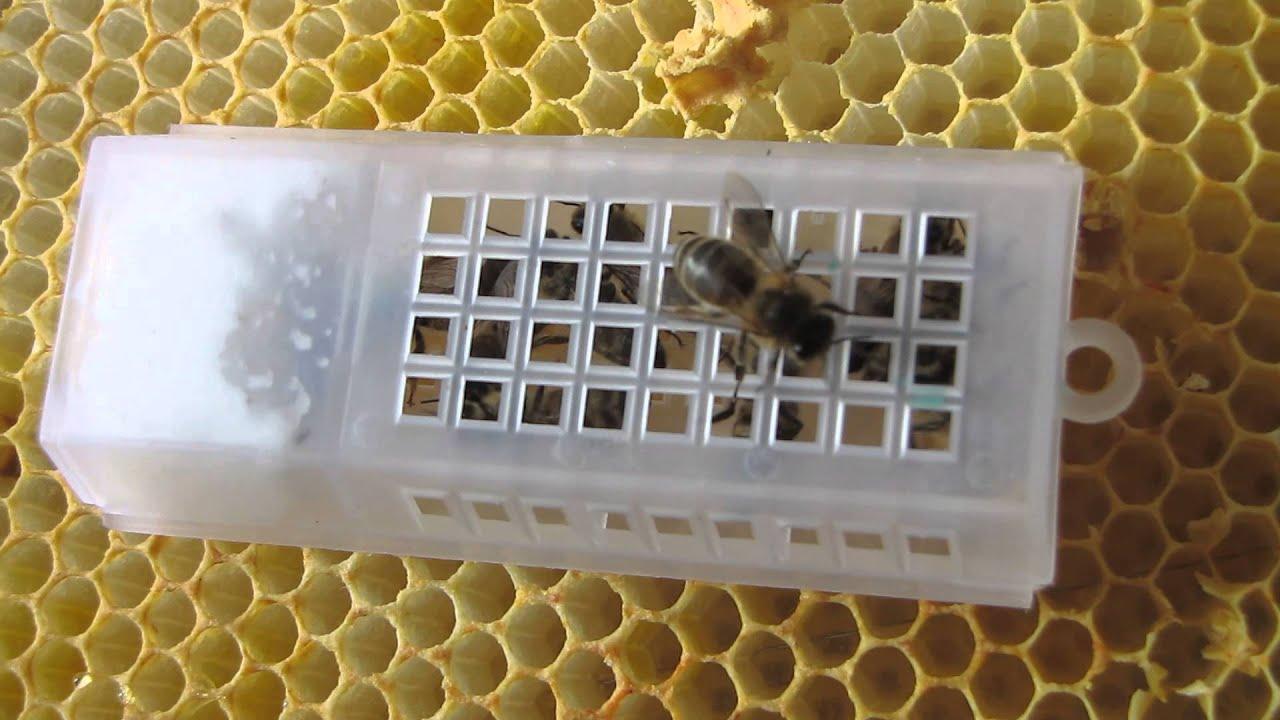 Queen Bee Cage Honeybee Nuc Hive Beekeeping 2014 Youtube