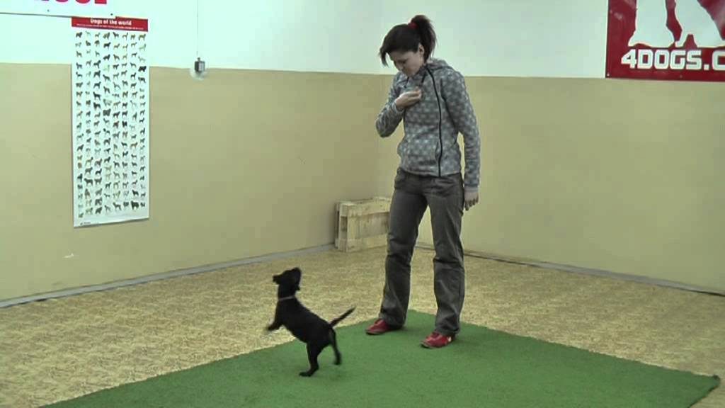 Puppy training 2 months old