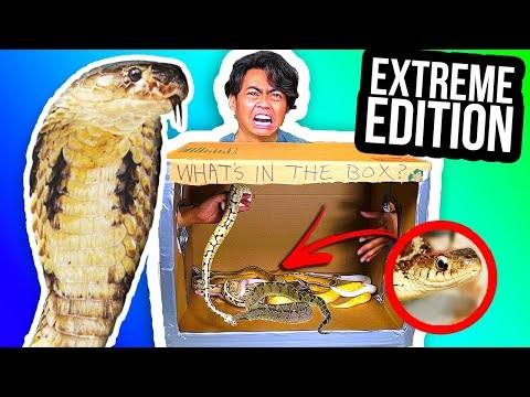 WHAT'S IN THE BOX CHALLENGE! (Extreme Animal Edition)