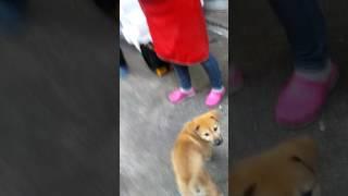 소닉vs 해피 2편 (강아지)