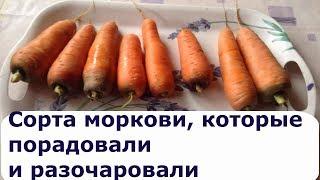 425. Обзор сортов моркови
