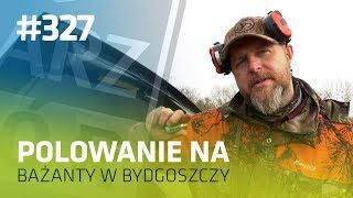 Darz Bór odc 327 - Polowanie na bażanty w Bydgoszczy