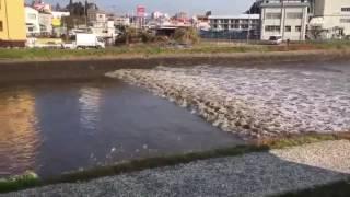 Video Amatir Gempa Bumi Fukushima, Jepang Tsunami November 2016