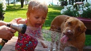 Funny Dog Enjoy Water in Summer Time | Dog love Water