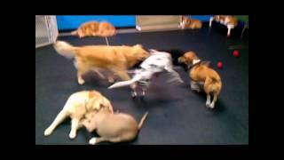 Fun At Tails R Waggin Doggie Daycare Westchester New York