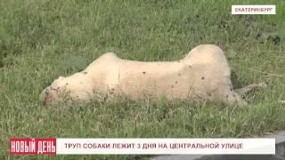 Труп собаки лежит 3 дня на центральной улице