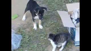 Котенок и щенок неожиданный финал первой встречи