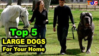 Top 5 Large Dog Breeds For Your Home : Large Dog Breeds : TUC